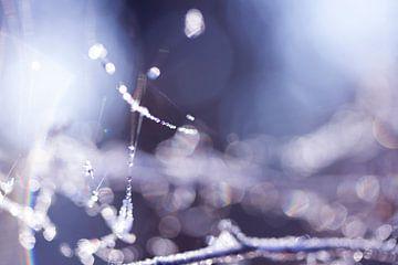 spinnerag met dauwdruppels in de winter van Karijn   Fine art Natuur en Reis Fotografie