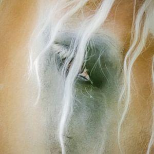 Close up paardenoog