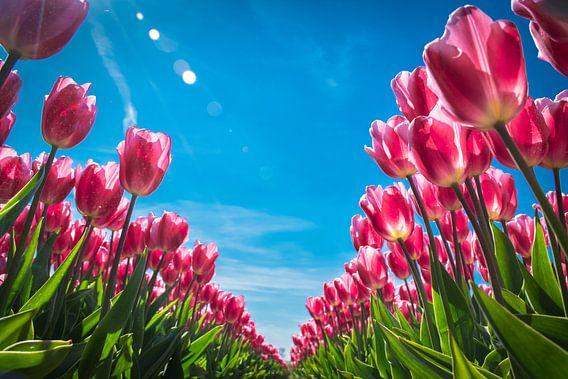 Tulpen in het voorjaar van Rietje Bulthuis