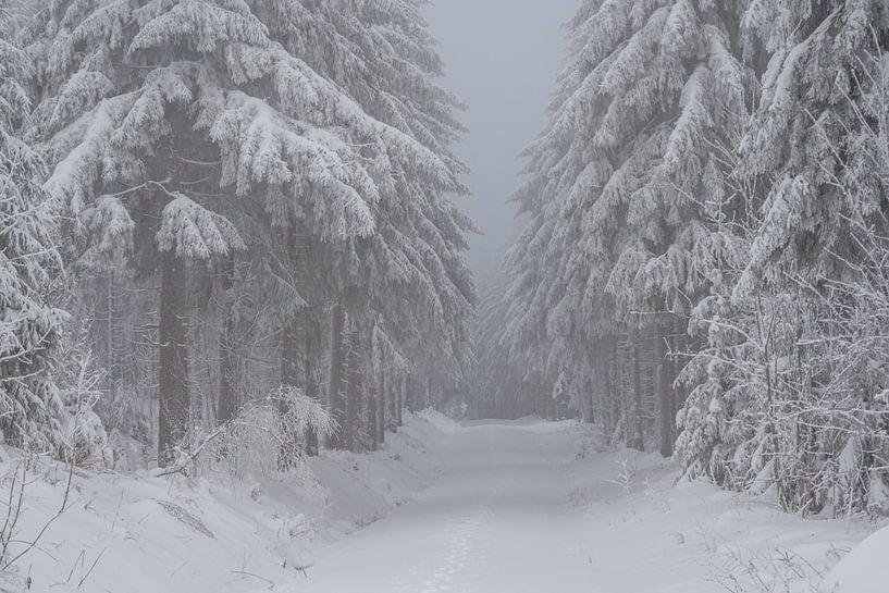 romantisch winterbos in het Erzgebirge in Saksen van Animaflora PicsStock