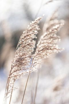 Winters palmgras van Sharona Sprong