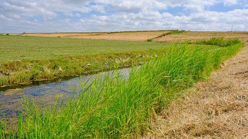 zomerlandschap Noord-Holland van