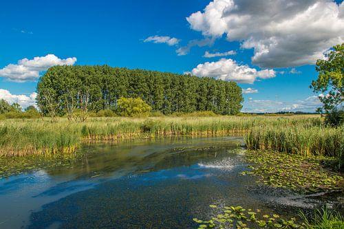 Sommerlandschaft in den Niederlanden. von