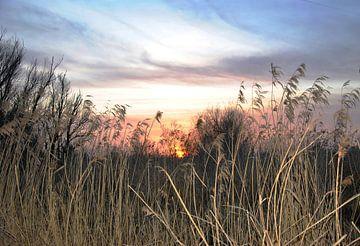 Doorkijkje  Oostvaardersplassen bij zonsondergang van M de Vos