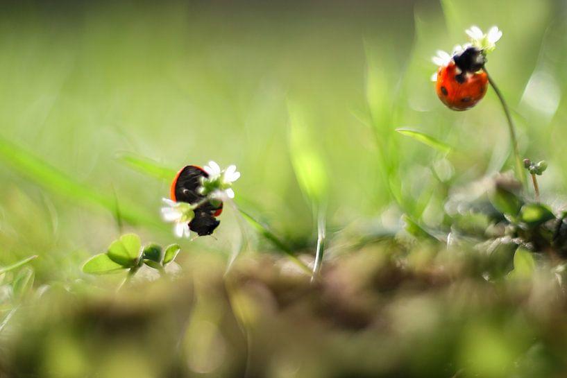 Spring fever van Gitta Reiszner
