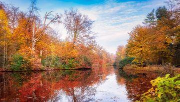 Bunter Panoramablick mit Herbstfarben im Wald von eric van der eijk