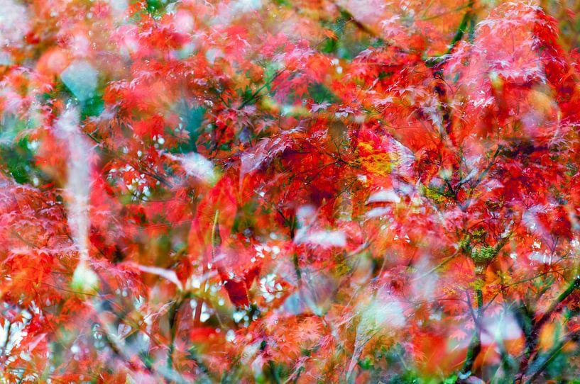 Rood blad van de Japanse Esdoorn  (Oh Happy Day!) van Paula van den Akker