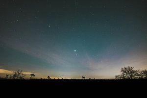 Drunense Duinen nachtportret