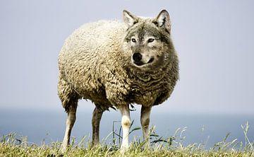 Wolf in schaapskleren van Sarah Richter