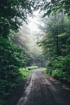 Foggy Road sur Patrycja Polechonska