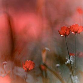 Akkerbloemen in rood van Jurjen Biesbroek