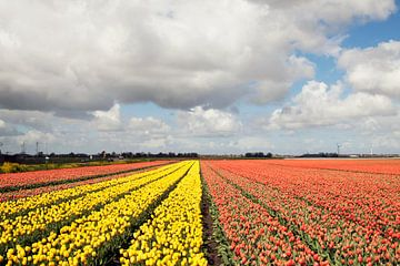 Tulipes jaunes et orange dans une rangée sur Maurice de vries