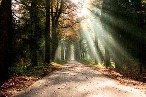 Sonnenstrahlen im herbstlichen Wald. von mandy vd Weerd