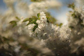Witte bloesemtak van Ruben de jong