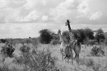 Giraffenpaar sur Ilse van den Berg