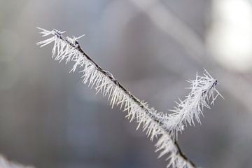 Bevroren tak van Kees Korbee