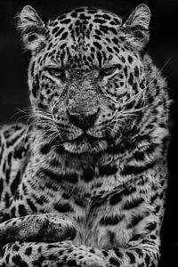 Panter zwart-wit