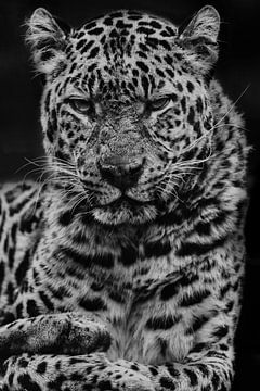 Panter zwart-wit von Renate Peppenster