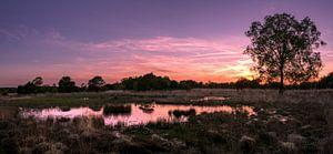 Gold Lake Reflection