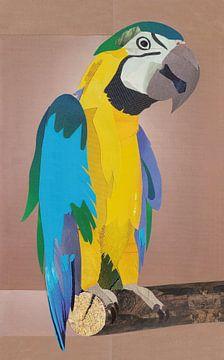 Parrot XL sur Kirsten Wagenaar