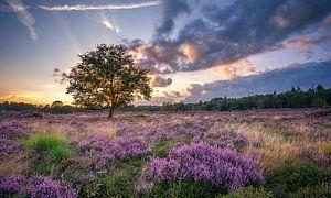 Bloeiende Heide van Martijn van Dellen