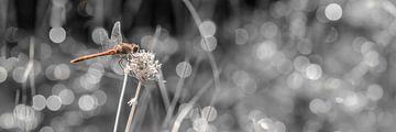 Macro Heidelibel van HvNunenfoto