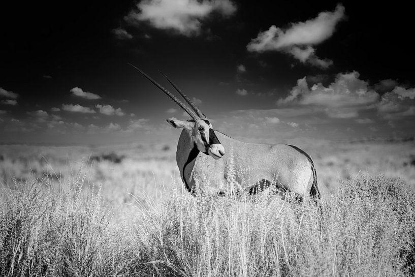 Oryx von Tilo Grellmann   Photography
