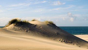 Zeeuwse Duinen van