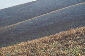 Lijnen in Toscane. van Rens Kromhout