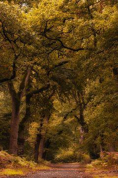 Forêt d'automne sur Moetwil en van Dijk - Fotografie