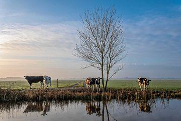 Koeien aan de waterkant in Friesland van Yvonne van Driel