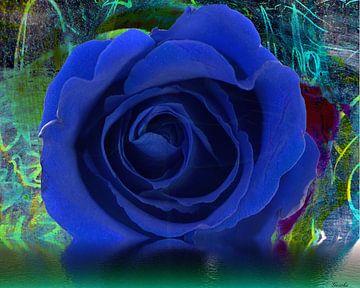Blaue Rose van Gertrud Scheffler