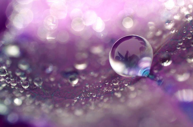 Violet drops van Jessica Berendsen