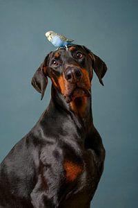 Hund Porträt von Petri Vermunt