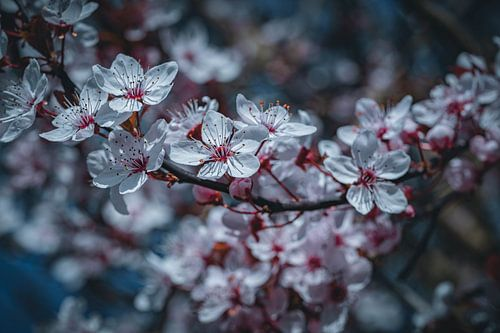 Die Natur erblüt