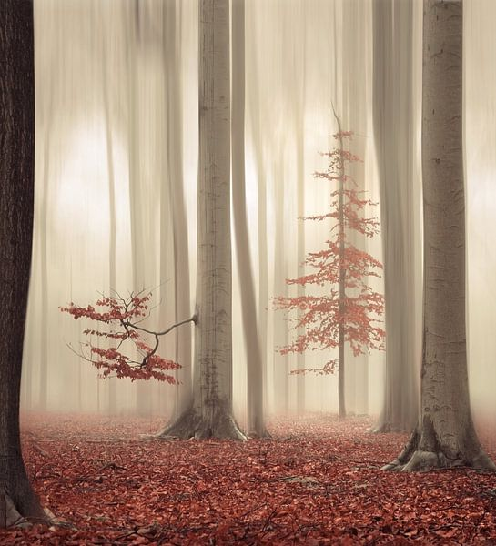 One tree life - The humble one van Rob Visser