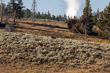 Alles van Yellowstone van Stefan Verheij