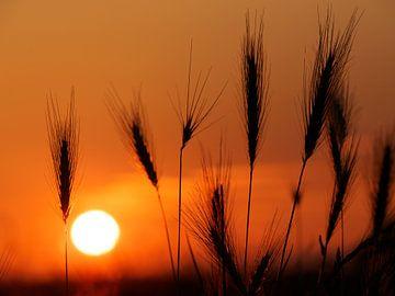 Silhouet zonsondergang van Frank Hoekzema