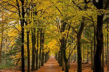 Uitzicht in herfstbos van Marianne van der Westen