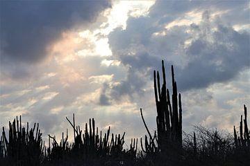 Cactussen in avondlucht Bonaire van Silvia Weenink