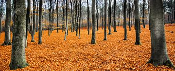 Orange Leaves Landscape,  Hoog Soeren, Veluwe van Remco Bosshard