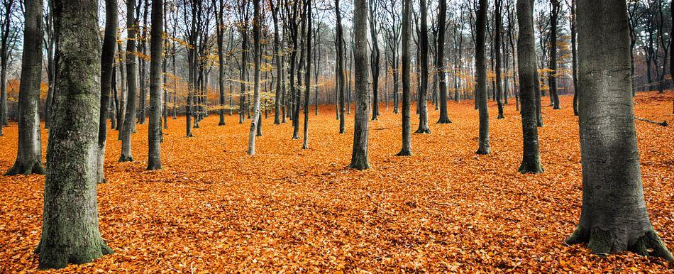Orange Leaves Landscape,  Hoog Soeren, Veluwe