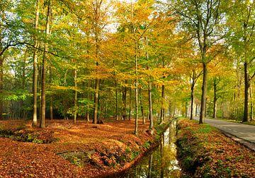 Herbst Wald Niedrig Feuerstelle von Corinne Welp