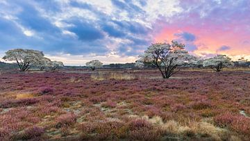 Sahara van Nederland van Anthony Trabano