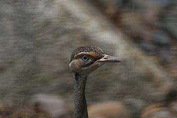 Vogel von Suzana Luttermann
