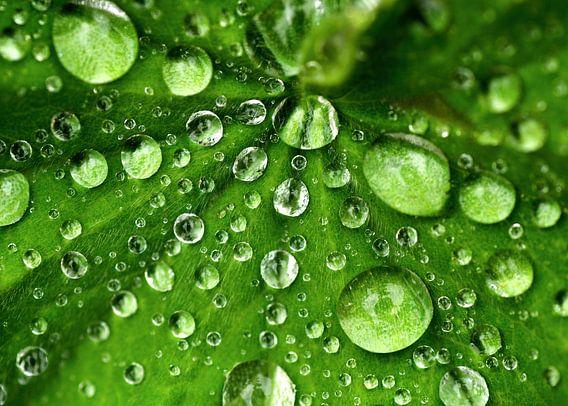Patroon van regendruppels van Birgitte Bergman