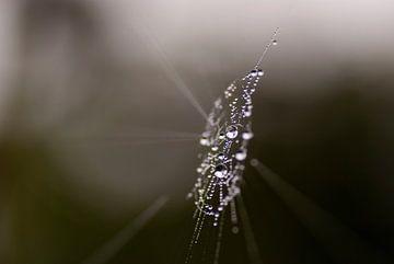 Abstract van kristalheldere dauwdruppels  in een  spinnenweb van Birgitte Bergman