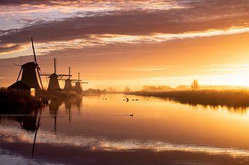 Nederlandse Dromen