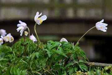 Kleine Blumen von Gerard de Zwaan