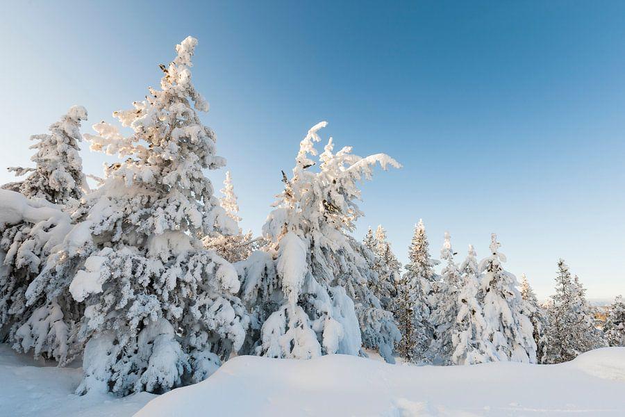 Besneeuwde bomen in Yellowstone National Park van Caroline Piek